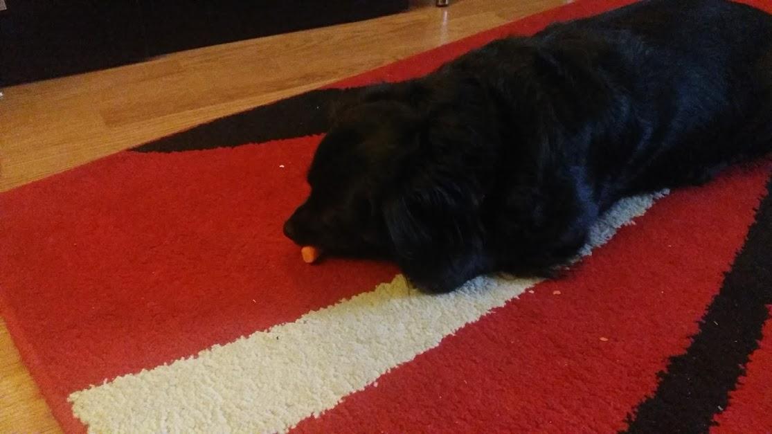 câine mănâncă morcov