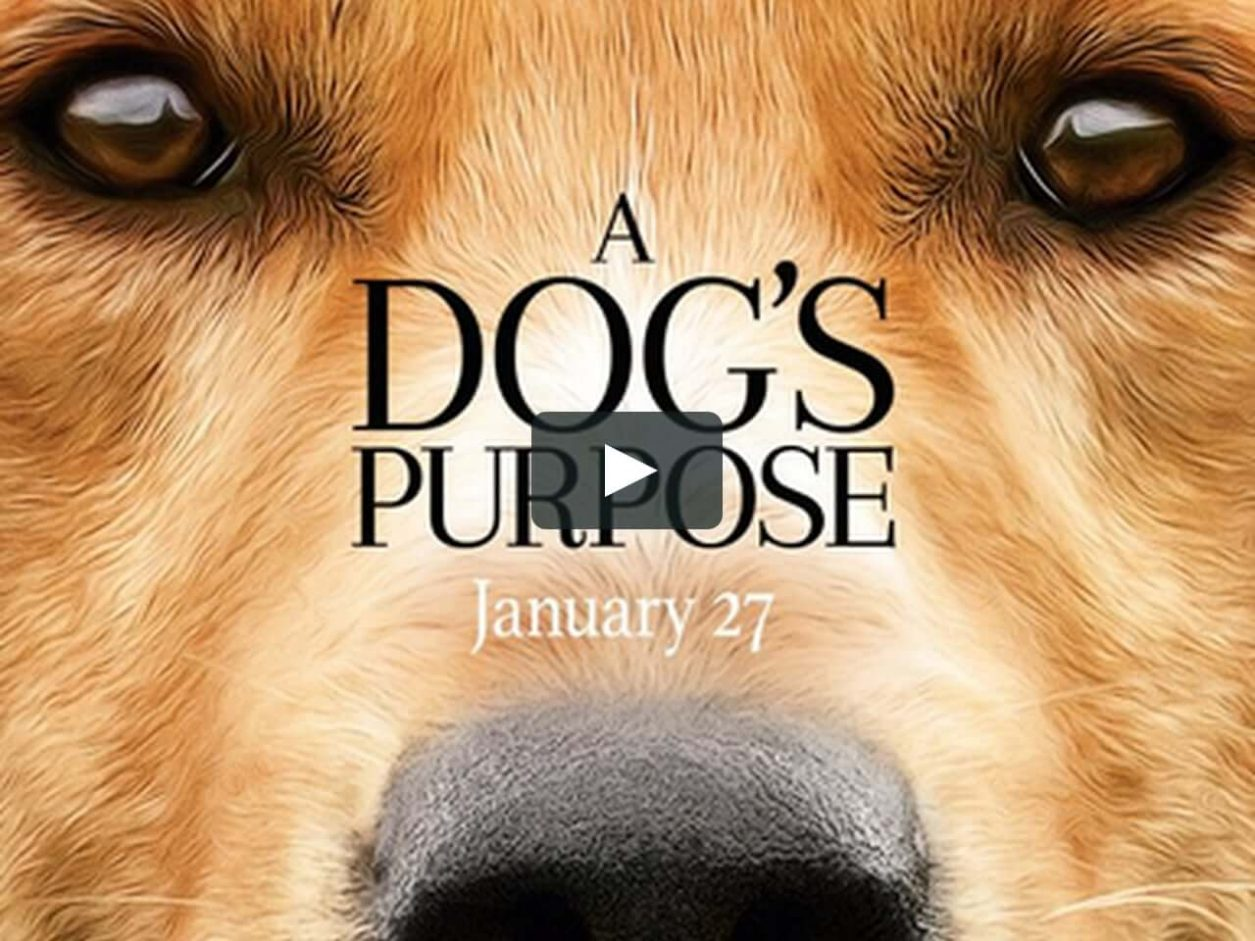 film a dog's purpose