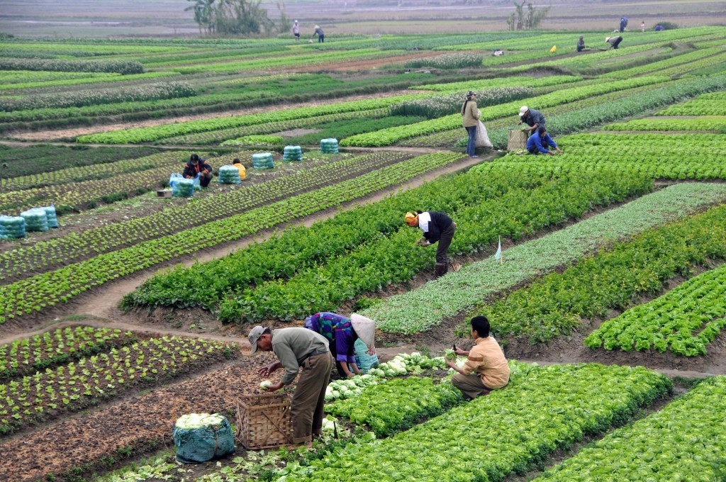 Agriculture_in_Vietnam_with_farmers-1024x680