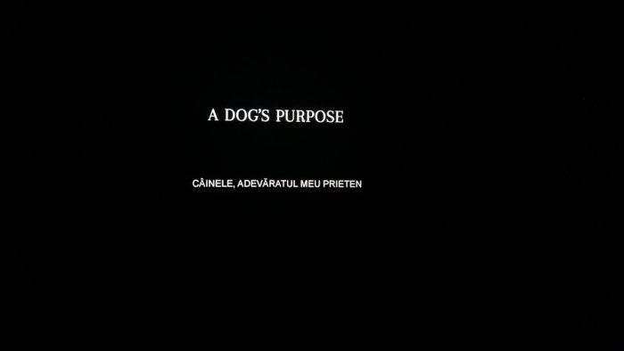 a dog's purpose film