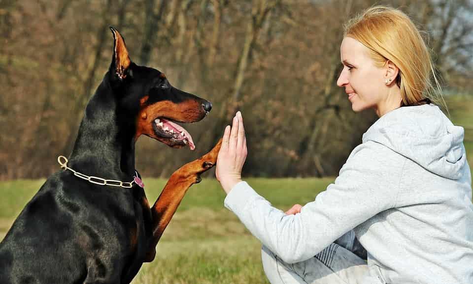 scăpa câinele de purici
