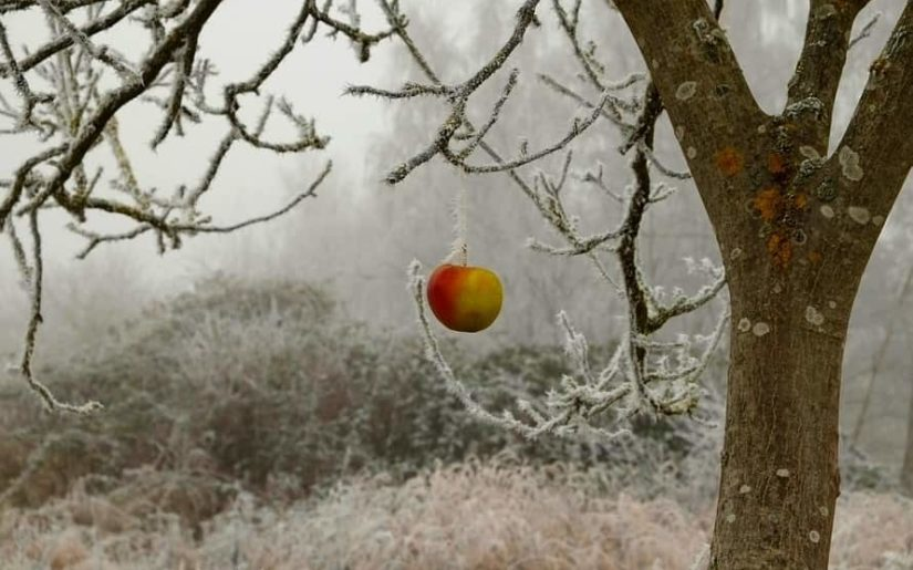 sfaturi pentru îngrijirea pomilor fructiferi iarna