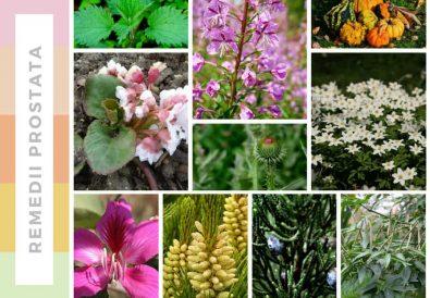 plante medicinale pentru tratarea prostatei mărite