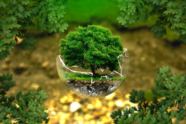 grijă pentru mediu