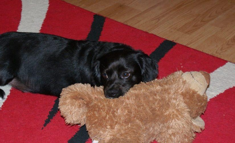 Jucării de pluș pentru câini