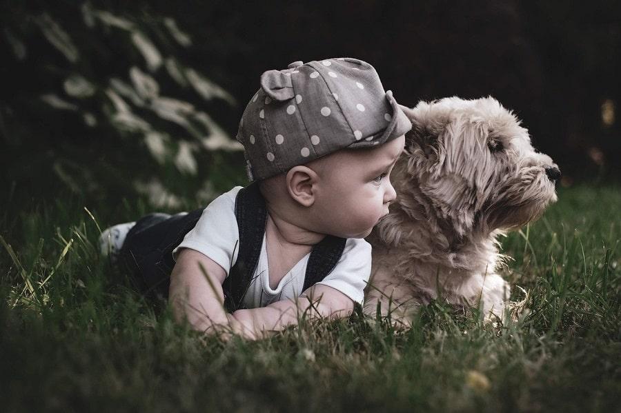 rase de câini pentru copii